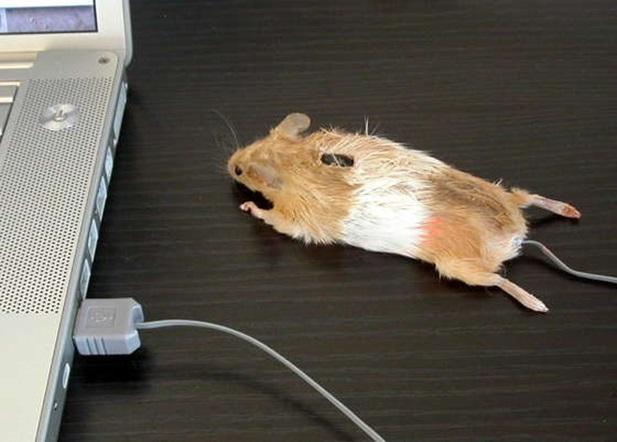 dịch vụ độ chuột chơi game